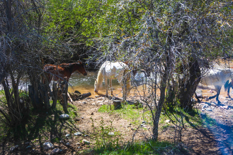 Några vita hästar och det krossade hjärtats sten