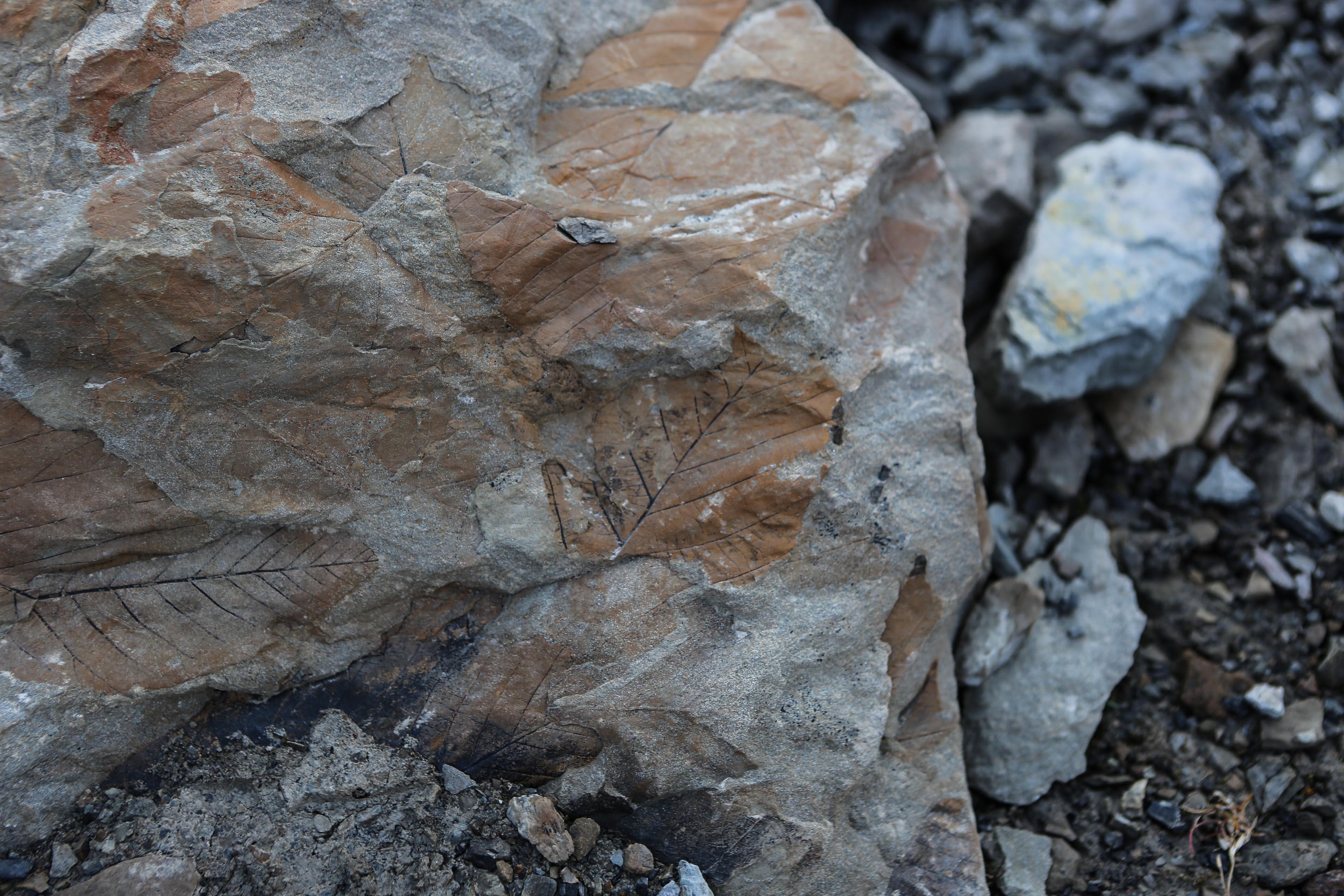 Sista dag på Svalbard – fossiljakt