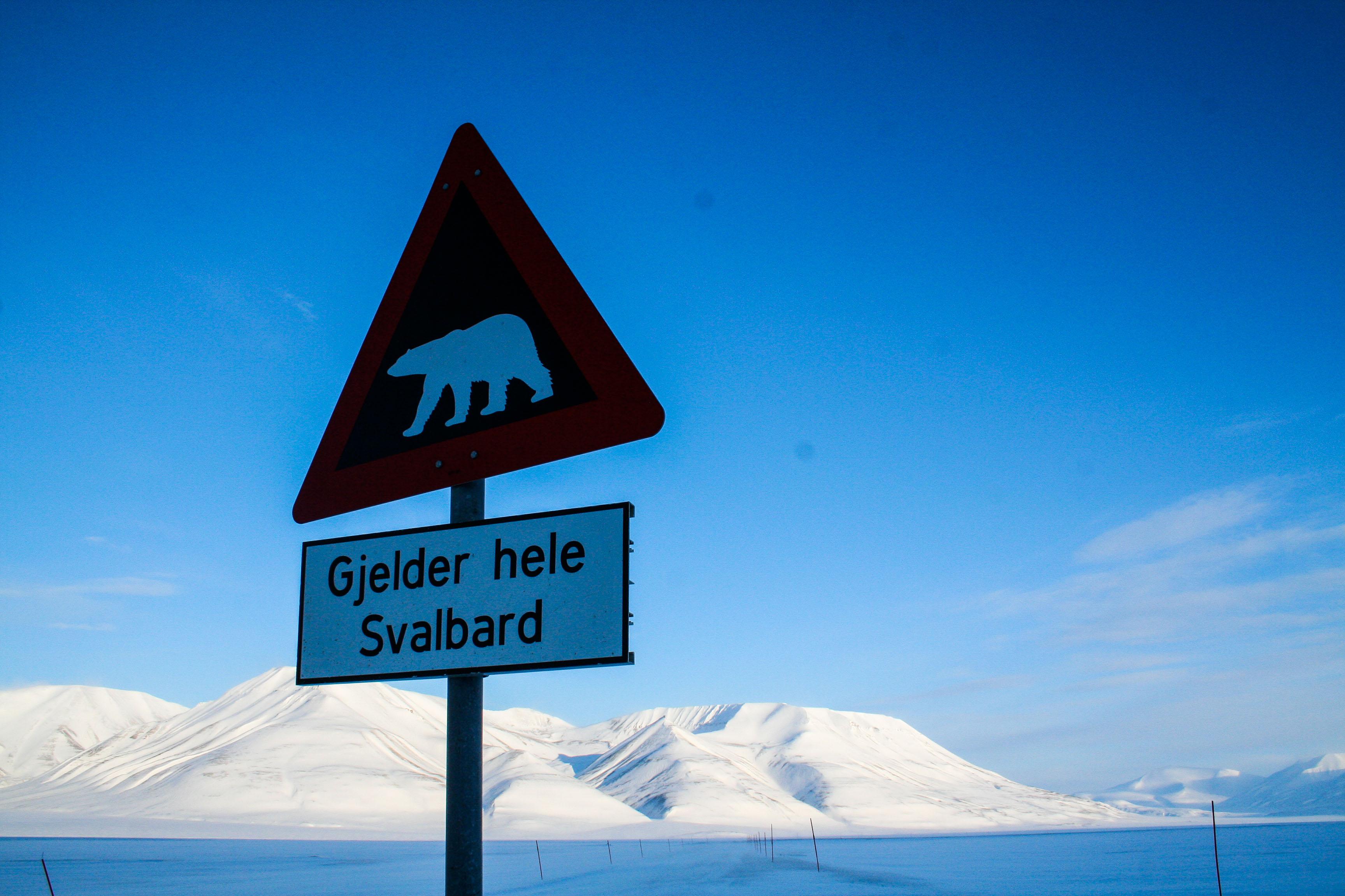 Till Svalbard med isbjörn på menyn