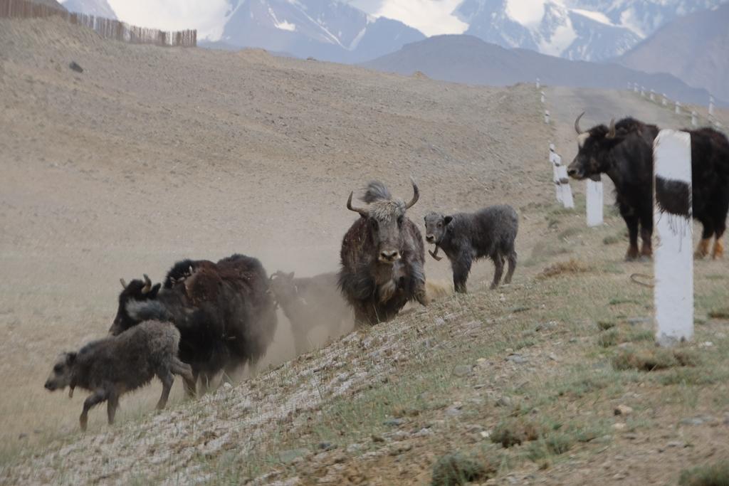 Pamir Highway – 10 bilder och berättelser