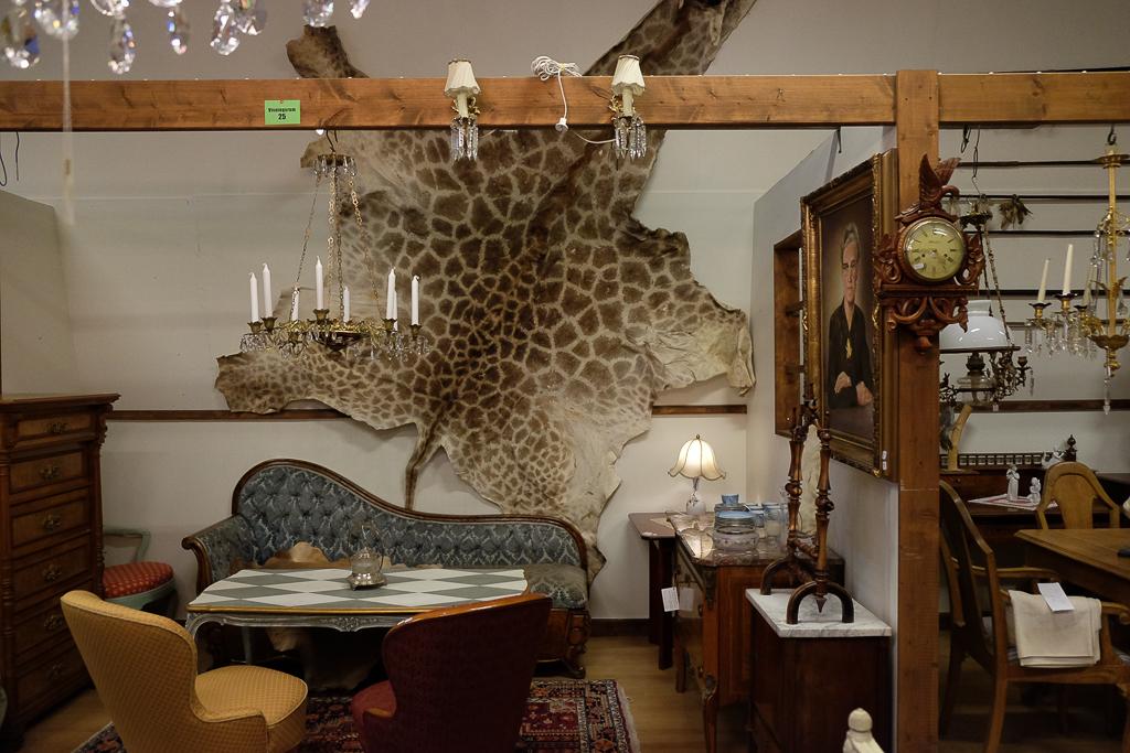 En giraff till jul?