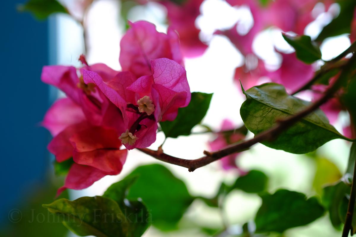 Turismstudier och blommor på balkongen