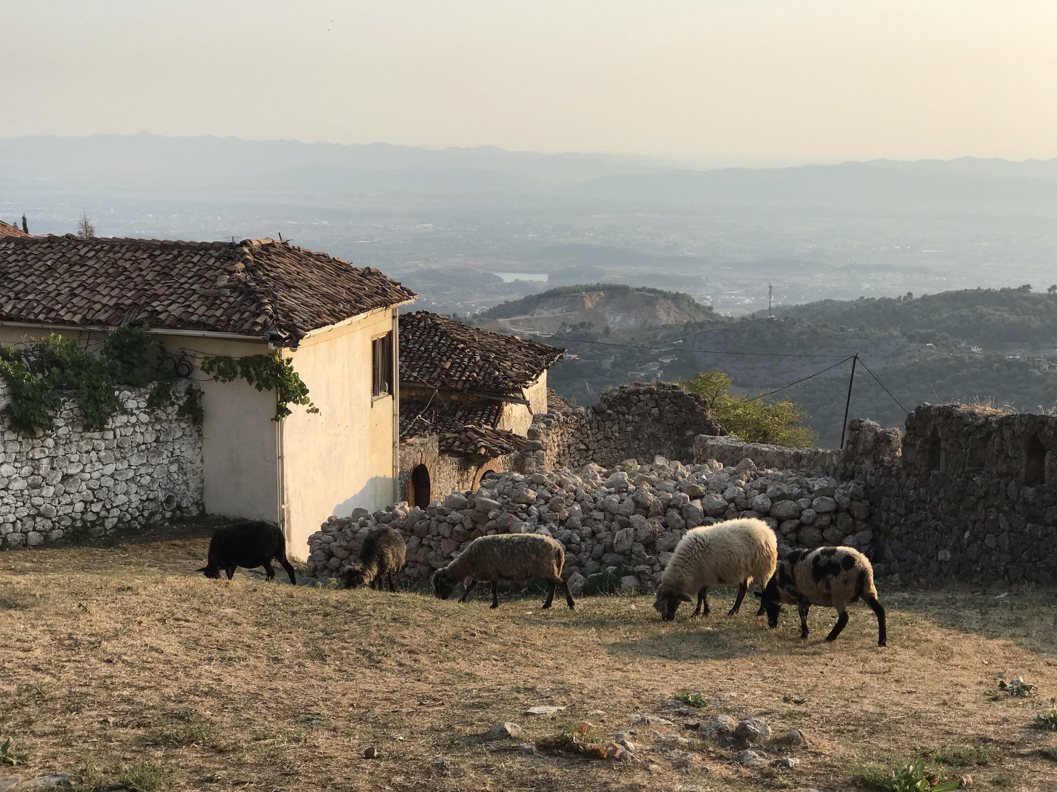 Panorama i Kruja